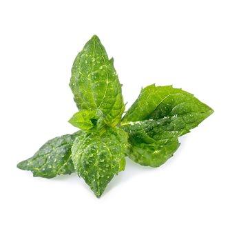 Menthe verte recharge Lingot pour potager Véritable